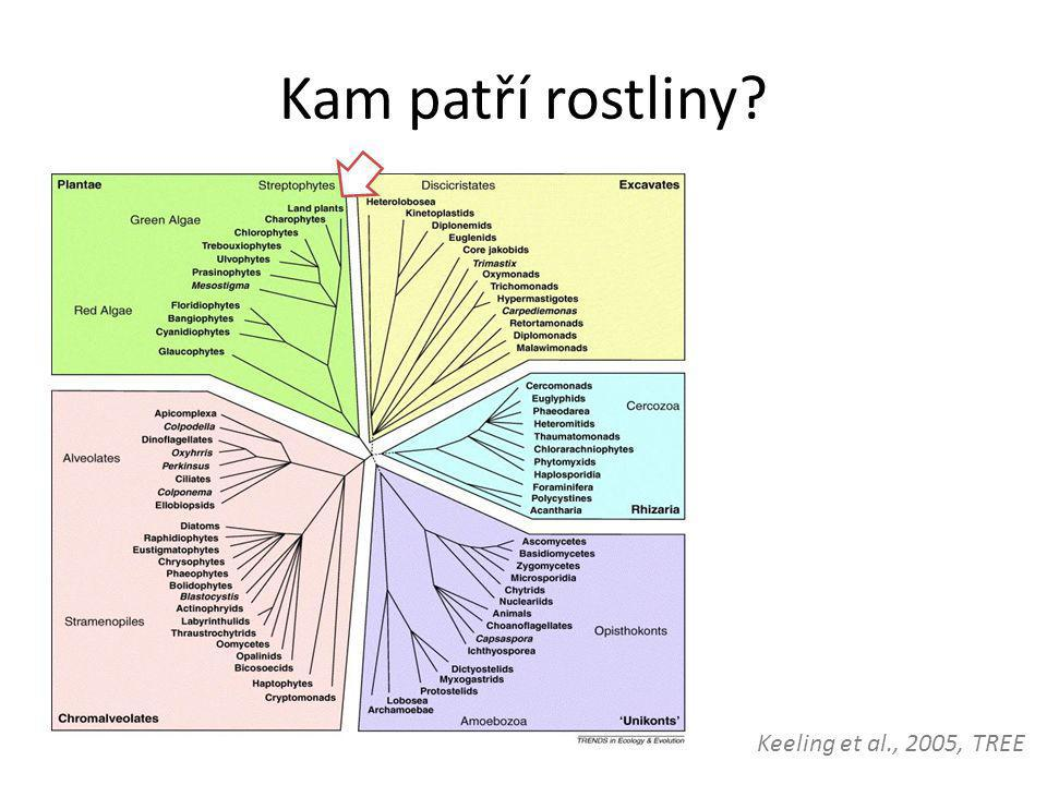 Kam patří rostliny? Keeling et al., 2005, TREE
