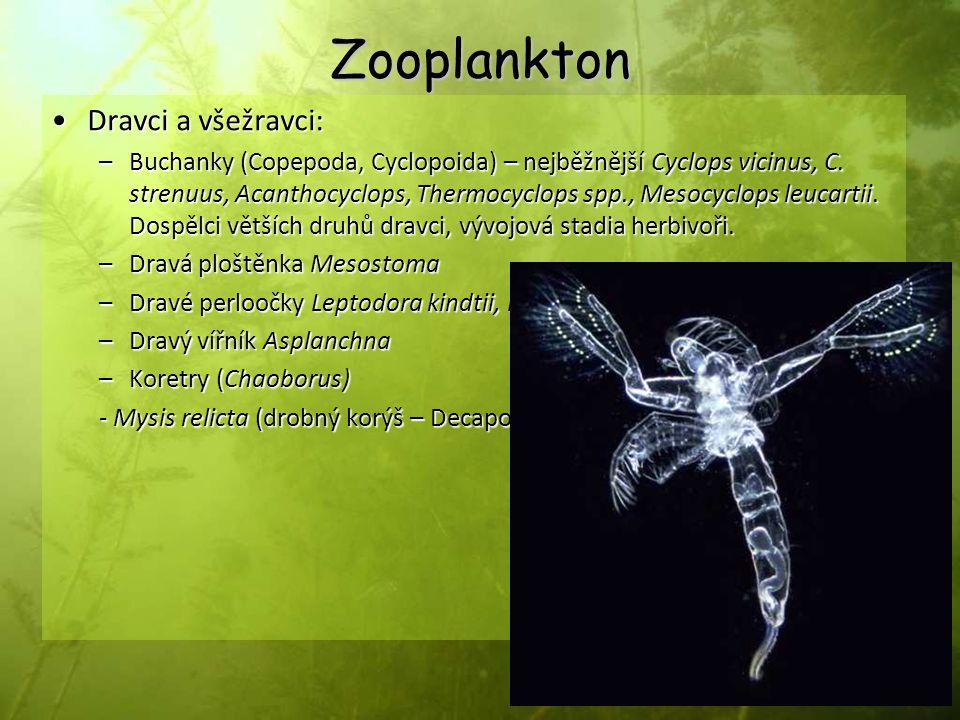 Zooplankton Dravci a všežravci:Dravci a všežravci: –Buchanky (Copepoda, Cyclopoida) – nejběžnější Cyclops vicinus, C. strenuus, Acanthocyclops, Thermo