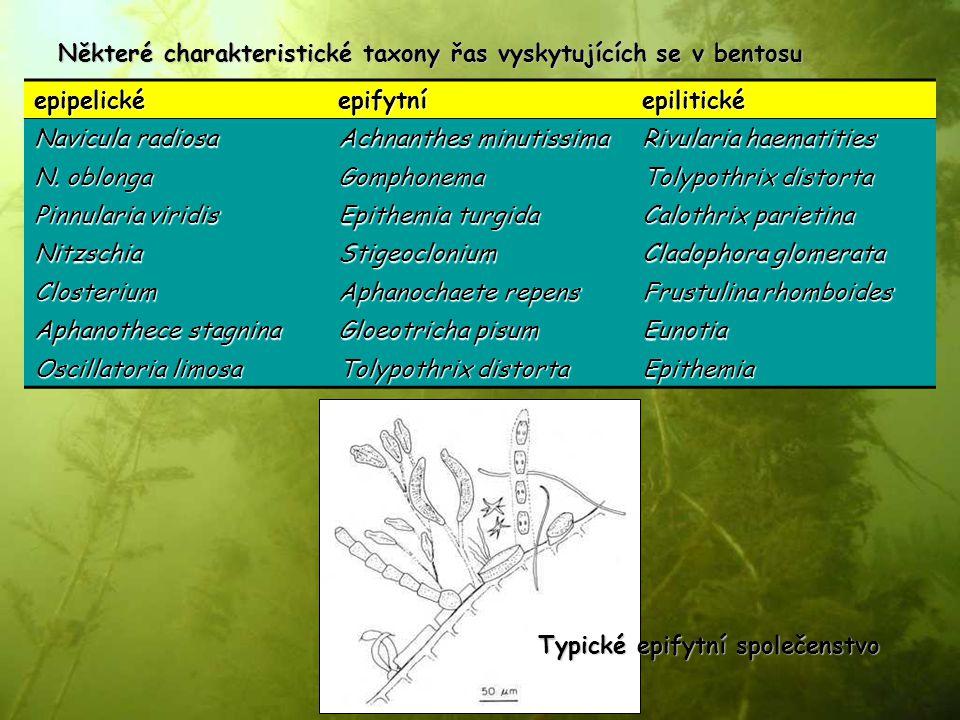 epipelickéepifytníepilitické Navicula radiosa Achnanthes minutissima Rivularia haematities N. oblonga Gomphonema Tolypothrix distorta Pinnularia virid