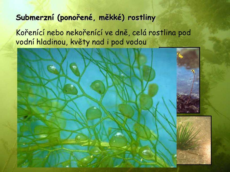 Submerzní (ponořené, měkké) rostliny Kořenící nebo nekořenící ve dně, celá rostlina pod vodní hladinou, květy nad i pod vodou