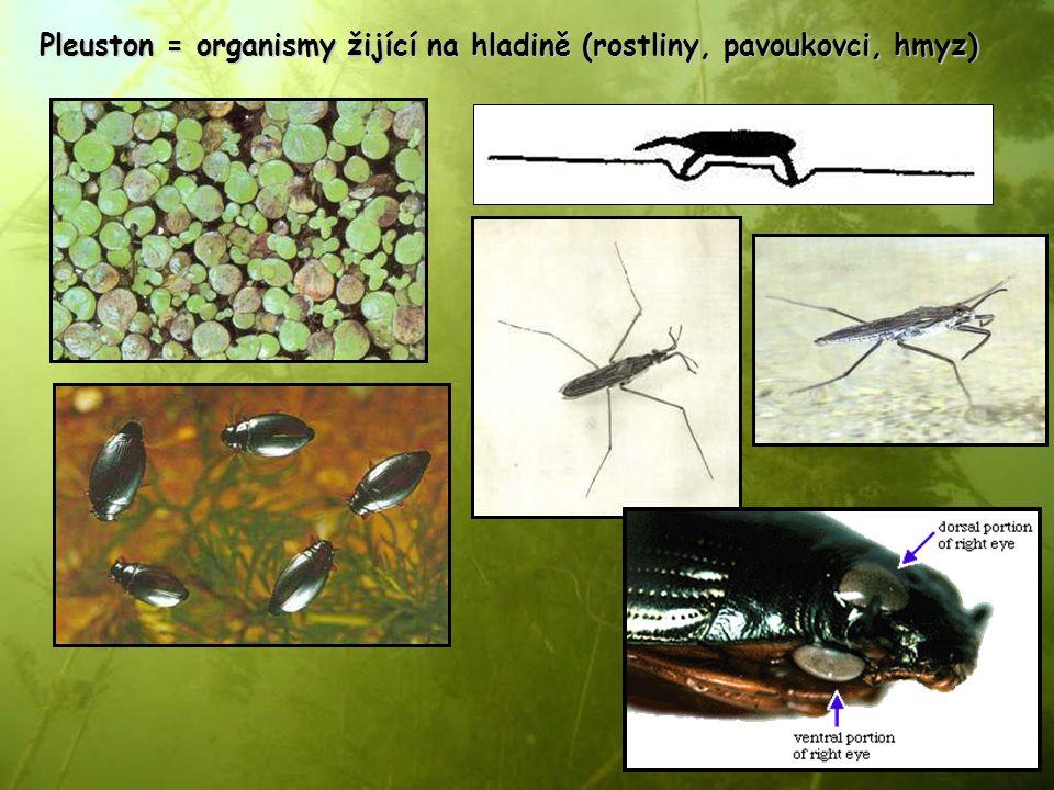 Pleuston = organismy žijící na hladině (rostliny, pavoukovci, hmyz)