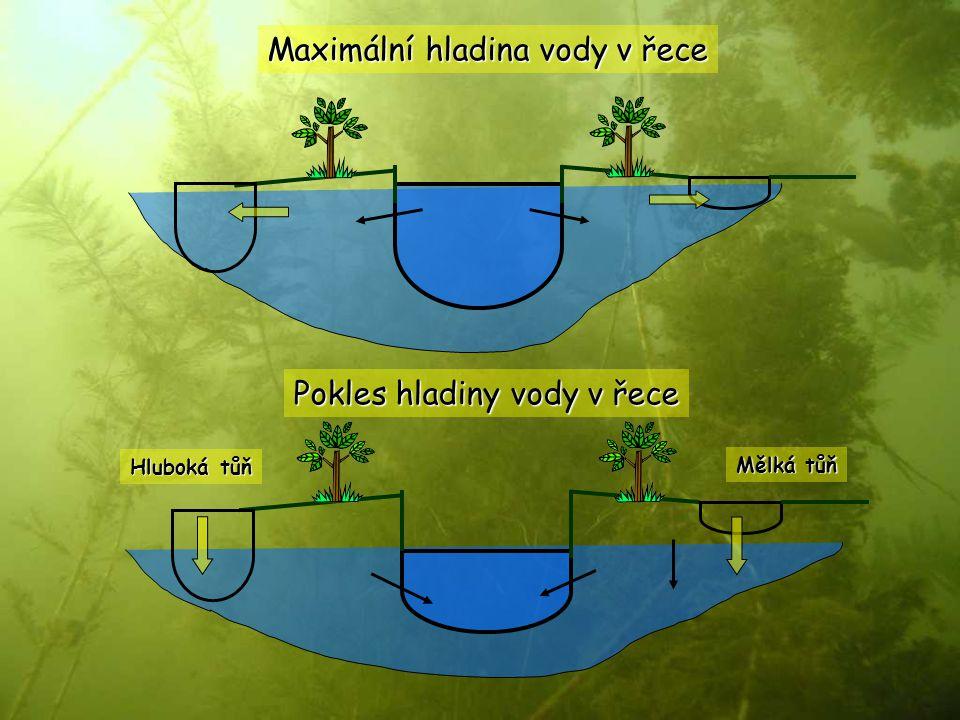 Maximální hladina vody v řece Pokles hladiny vody v řece Mělká tůň Hluboká tůň