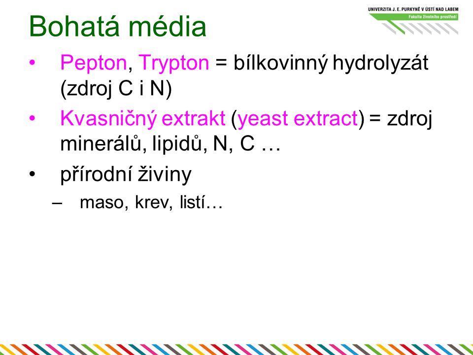 Bohatá média Pepton, Trypton = bílkovinný hydrolyzát (zdroj C i N) Kvasničný extrakt (yeast extract) = zdroj minerálů, lipidů, N, C … přírodní živiny –maso, krev, listí…