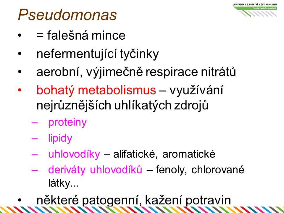 Pseudomonas = falešná mince nefermentující tyčinky aerobní, výjimečně respirace nitrátů bohatý metabolismus – využívání nejrůznějších uhlíkatých zdroj