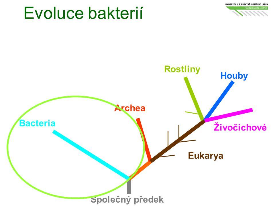 Evoluce bakterií Aquifex Thermotoga Zelené nesirné bakterie Radiorezistentní mikrokoky Spirochety Zelené sirné bakterie Planktomycety Chlamydie Grampozitivní bakterie Proteobakterie Flavobakterie Cytophaga Bacteroides Cyanobakterie