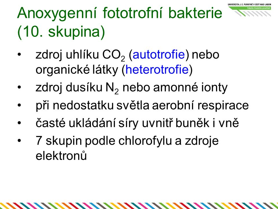Anoxygenní fototrofní bakterie (10. skupina) zdroj uhlíku CO 2 (autotrofie) nebo organické látky (heterotrofie) zdroj dusíku N 2 nebo amonné ionty při