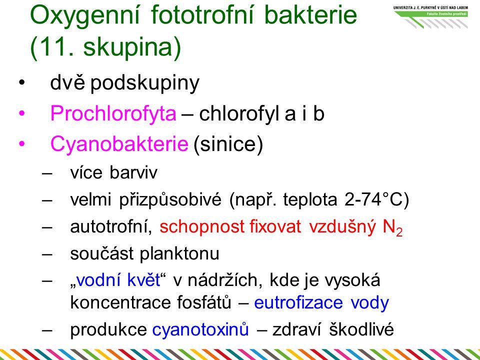 Oxygenní fototrofní bakterie (11. skupina) dvě podskupiny Prochlorofyta – chlorofyl a i b Cyanobakterie (sinice) –více barviv –velmi přizpůsobivé (nap