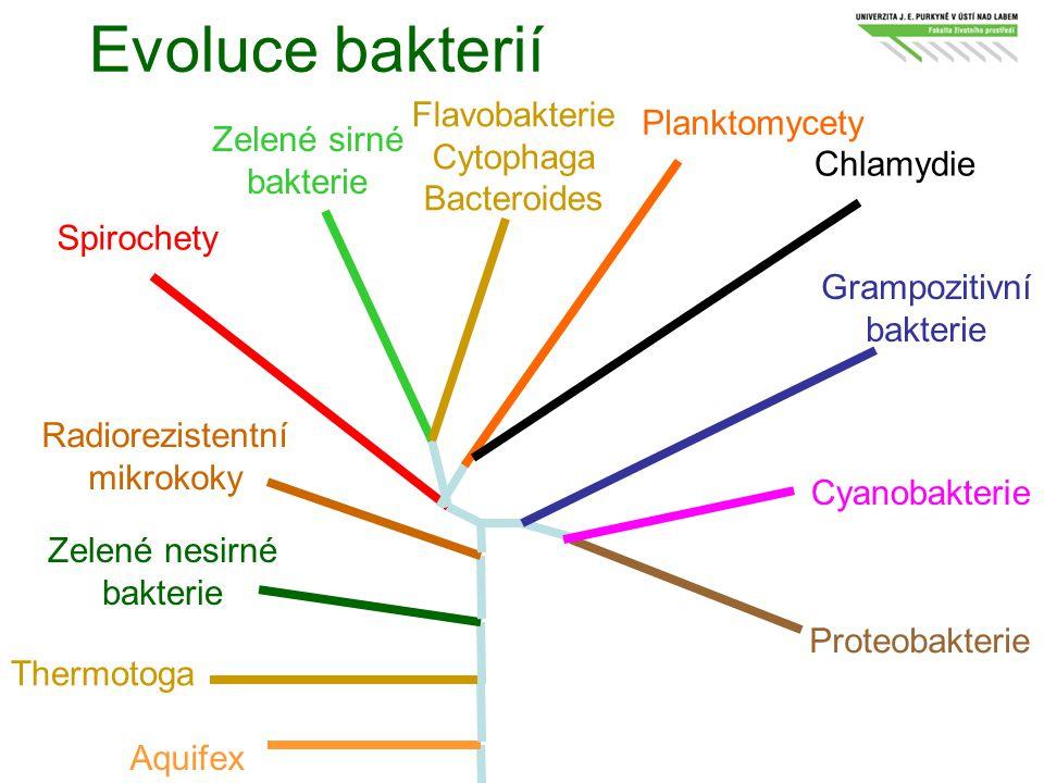 Evoluce bakterií Aquifex Thermotoga Zelené nesirné bakterie Radiorezistentní mikrokoky Spirochety Zelené sirné bakterie Planktomycety Chlamydie Grampo
