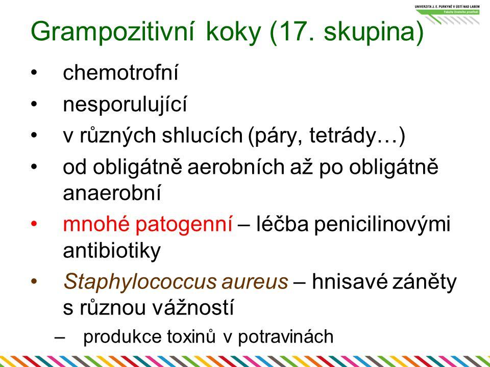 Grampozitivní koky (17. skupina) chemotrofní nesporulující v různých shlucích (páry, tetrády…) od obligátně aerobních až po obligátně anaerobní mnohé