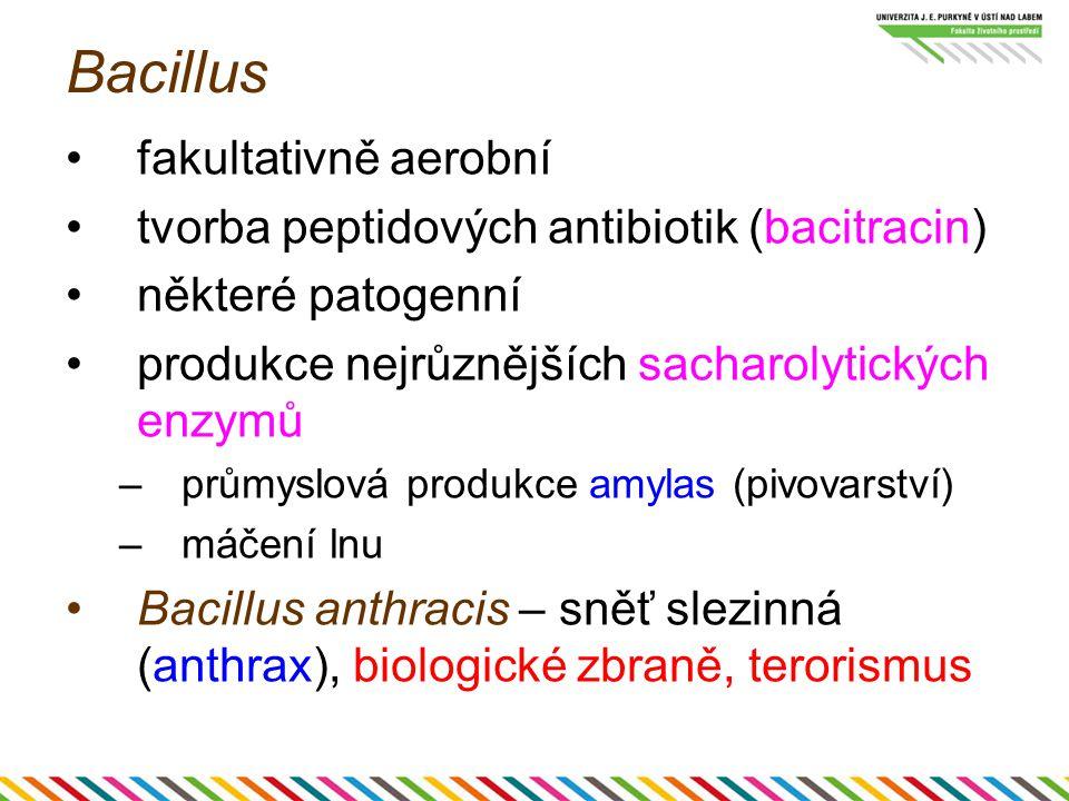 Bacillus fakultativně aerobní tvorba peptidových antibiotik (bacitracin) některé patogenní produkce nejrůznějších sacharolytických enzymů –průmyslová