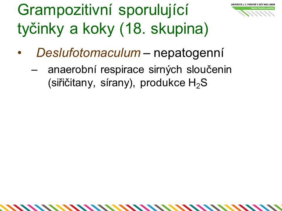 Grampozitivní sporulující tyčinky a koky (18. skupina) Deslufotomaculum – nepatogenní –anaerobní respirace sirných sloučenin (siřičitany, sírany), pro