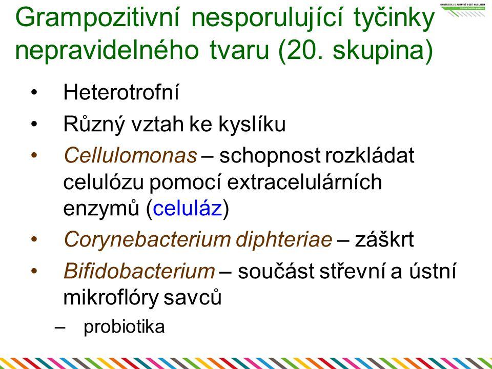 Grampozitivní nesporulující tyčinky nepravidelného tvaru (20. skupina) Heterotrofní Různý vztah ke kyslíku Cellulomonas – schopnost rozkládat celulózu