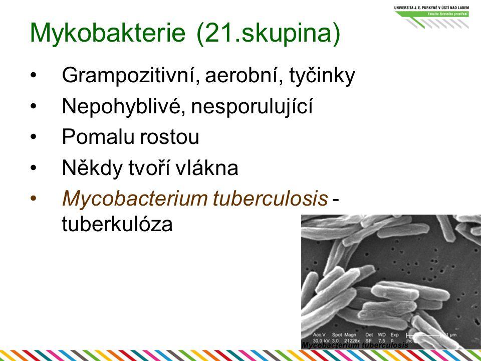 Mykobakterie (21.skupina) Grampozitivní, aerobní, tyčinky Nepohyblivé, nesporulující Pomalu rostou Někdy tvoří vlákna Mycobacterium tuberculosis - tub