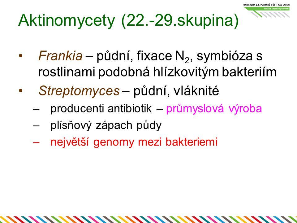 Aktinomycety (22.-29.skupina) Frankia – půdní, fixace N 2, symbióza s rostlinami podobná hlízkovitým bakteriím Streptomyces – půdní, vláknité –produce