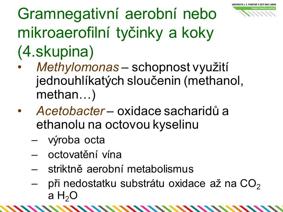 Gramnegativní aerobní nebo mikroaerofilní tyčinky a koky (4.skupina) Azotobacter – váže vzdušný N 2 Rhizobium – váže vzdušný N 2, symbióza s kořeny rostlin (luskoviny) –hlízkovité bakterie Legionella pneumophila – legionářská nemoc –přenos vodou, včetně trubek Neisseria gonorrhoeae – kapavka Neisseria meningitidis – meningitida