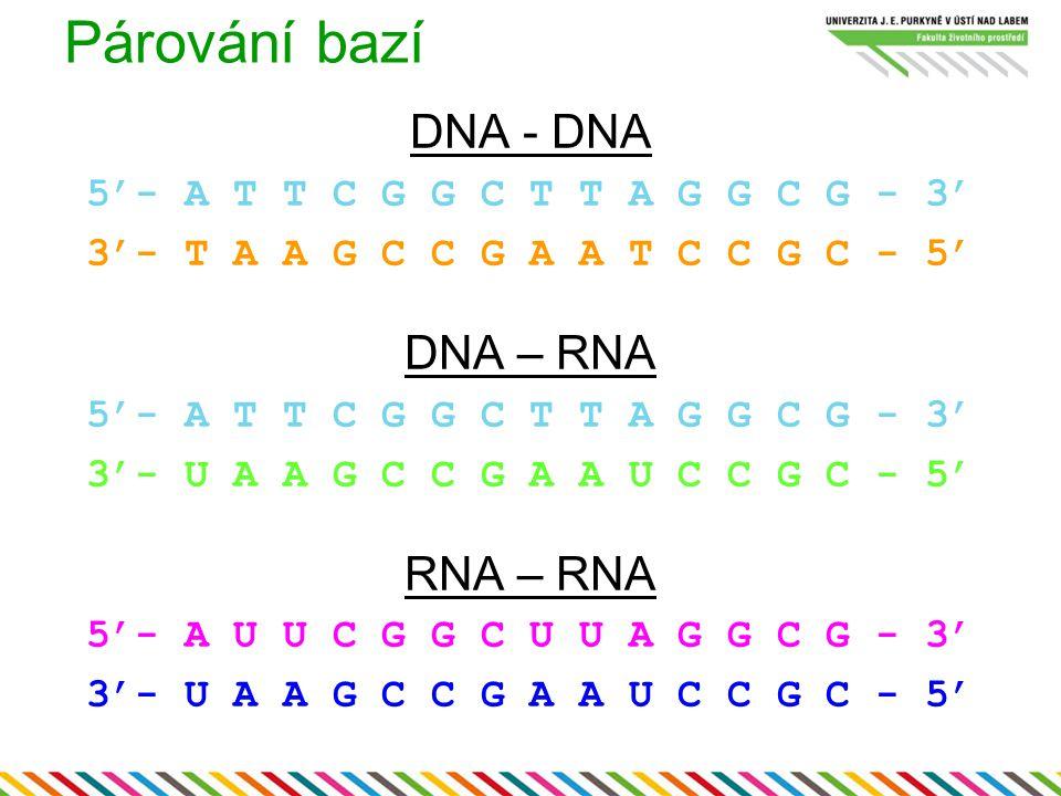 Párování bazí DNA - DNA 5'- A T T C G G C T T A G G C G - 3' 3'- T A A G C C G A A T C C G C - 5' DNA – RNA 5'- A T T C G G C T T A G G C G - 3' 3'- U