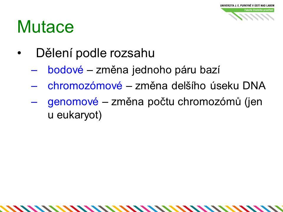 Mutace Dělení podle rozsahu –bodové – změna jednoho páru bazí –chromozómové – změna delšího úseku DNA –genomové – změna počtu chromozómů (jen u eukary