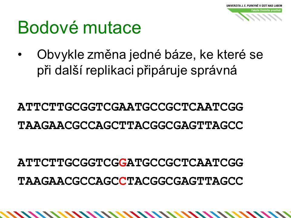 Bodové mutace Obvykle změna jedné báze, ke které se při další replikaci připáruje správná ATTCTTGCGGTCGAATGCCGCTCAATCGG TAAGAACGCCAGCTTACGGCGAGTTAGCC