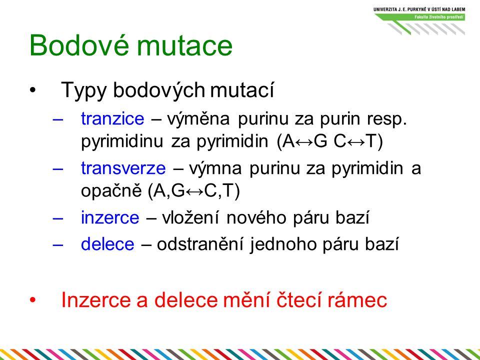 Bodové mutace Typy bodových mutací –tranzice – výměna purinu za purin resp. pyrimidinu za pyrimidin (A↔G C↔T) –transverze – výmna purinu za pyrimidin