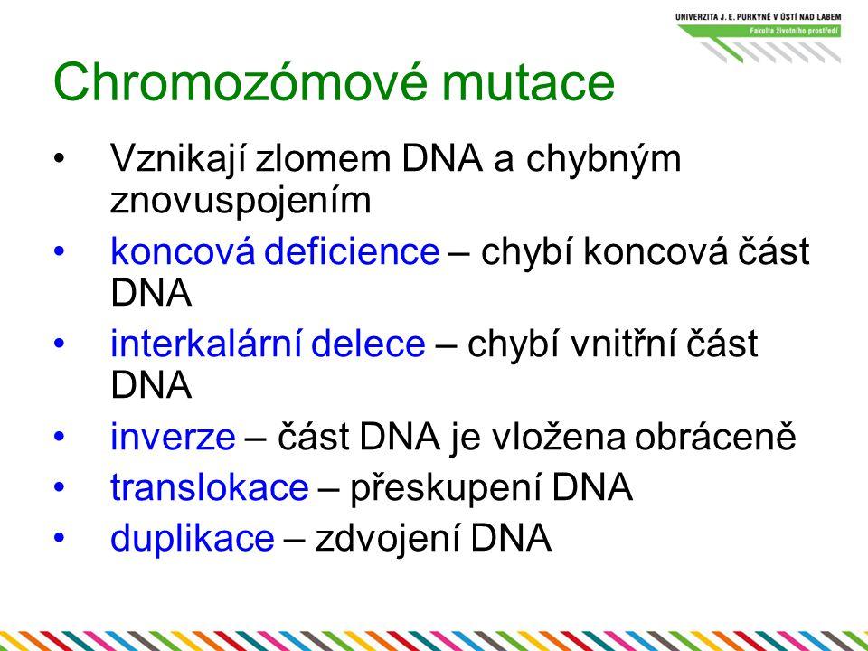 Chromozómové mutace Vznikají zlomem DNA a chybným znovuspojením koncová deficience – chybí koncová část DNA interkalární delece – chybí vnitřní část D