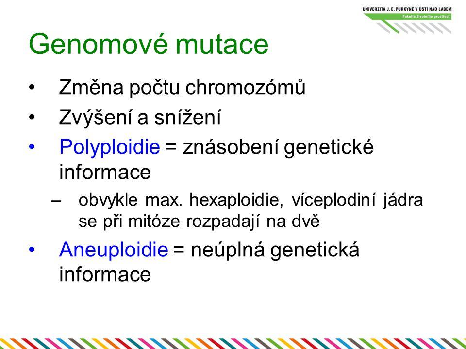 Genomové mutace Změna počtu chromozómů Zvýšení a snížení Polyploidie = znásobení genetické informace –obvykle max. hexaploidie, víceplodiní jádra se p