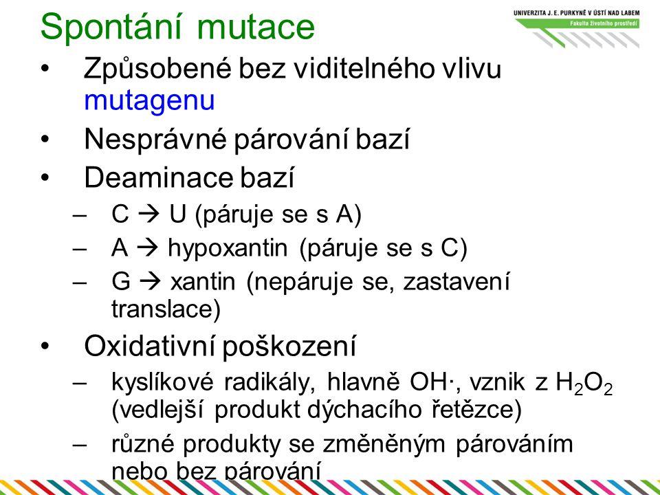 Spontání mutace Způsobené bez viditelného vlivu mutagenu Nesprávné párování bazí Deaminace bazí –C  U (páruje se s A) –A  hypoxantin (páruje se s C)