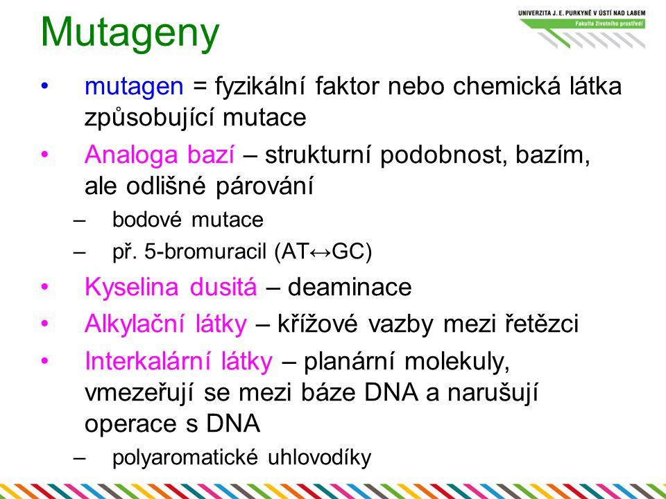 Mutageny mutagen = fyzikální faktor nebo chemická látka způsobující mutace Analoga bazí – strukturní podobnost, bazím, ale odlišné párování –bodové mu