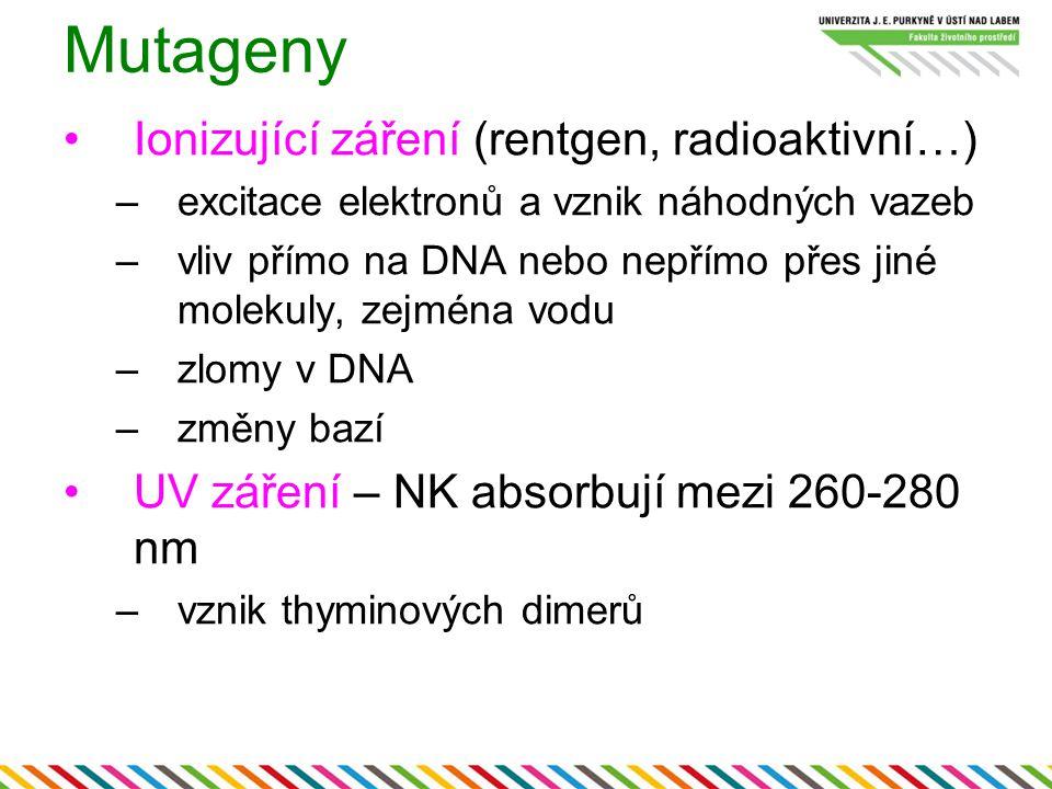 Mutageny Ionizující záření (rentgen, radioaktivní…) –excitace elektronů a vznik náhodných vazeb –vliv přímo na DNA nebo nepřímo přes jiné molekuly, ze