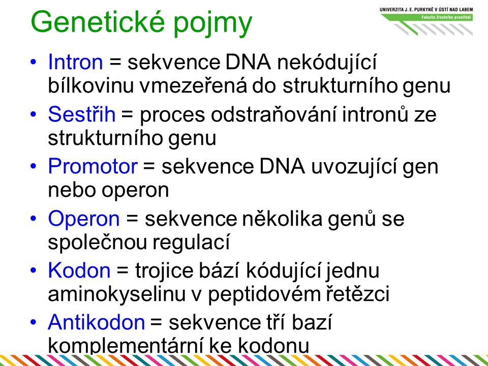 Genetické pojmy Intron = sekvence DNA nekódující bílkovinu vmezeřená do strukturního genu Sestřih = proces odstraňování intronů ze strukturního genu P