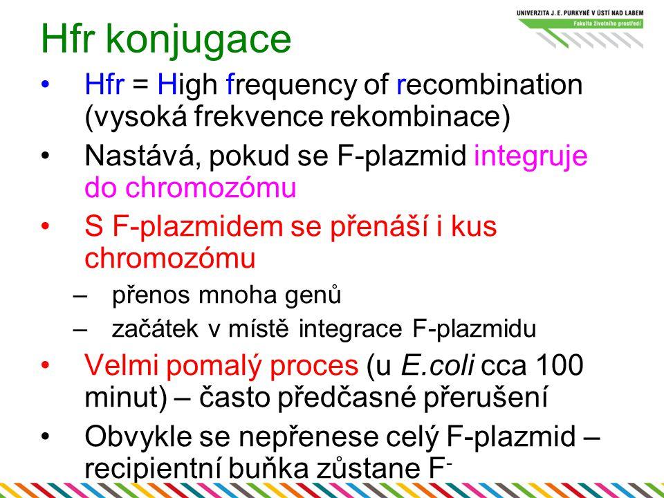 Hfr konjugace Hfr = High frequency of recombination (vysoká frekvence rekombinace) Nastává, pokud se F-plazmid integruje do chromozómu S F-plazmidem s