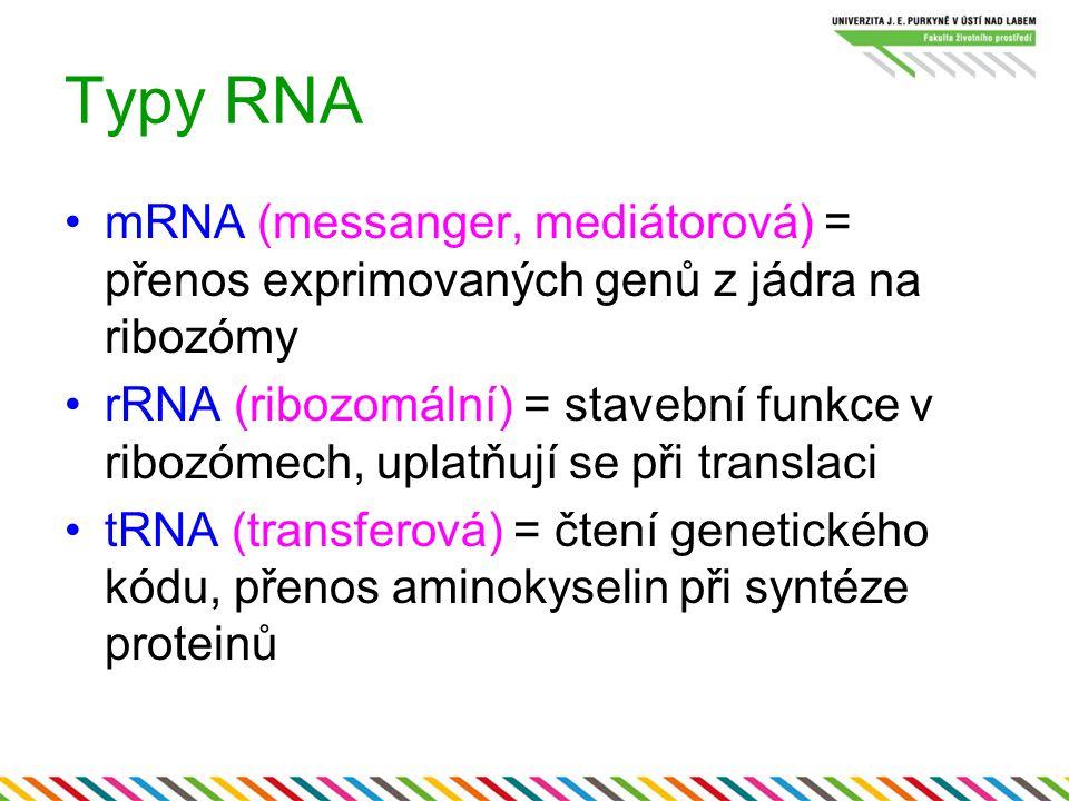 Typy RNA mRNA (messanger, mediátorová) = přenos exprimovaných genů z jádra na ribozómy rRNA (ribozomální) = stavební funkce v ribozómech, uplatňují se