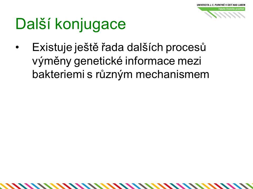 Další konjugace Existuje ještě řada dalších procesů výměny genetické informace mezi bakteriemi s různým mechanismem