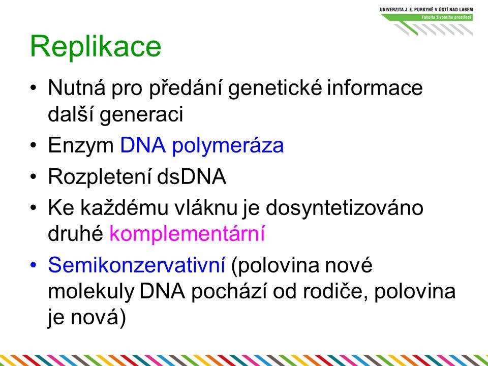 Replikace Nutná pro předání genetické informace další generaci Enzym DNA polymeráza Rozpletení dsDNA Ke každému vláknu je dosyntetizováno druhé komple