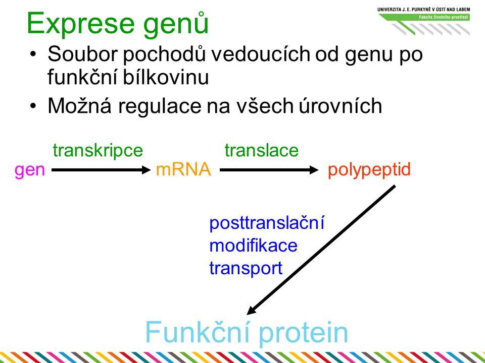 Exprese genů genmRNA transkripcetranslace polypeptid posttranslační modifikace transport Funkční protein Soubor pochodů vedoucích od genu po funkční b