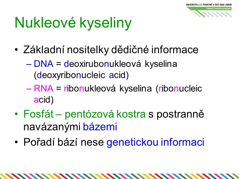 Nukleové kyseliny Základní nositelky dědičné informace –DNA = deoxirubonukleová kyselina (deoxyribonucleic acid) –RNA = ribonukleová kyselina (ribonuc