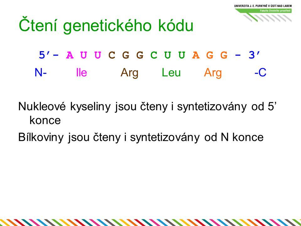 Čtení genetického kódu 5'- A U U C G G C U U A G G - 3' N- Ile Arg Leu Arg -C Nukleové kyseliny jsou čteny i syntetizovány od 5' konce Bílkoviny jsou