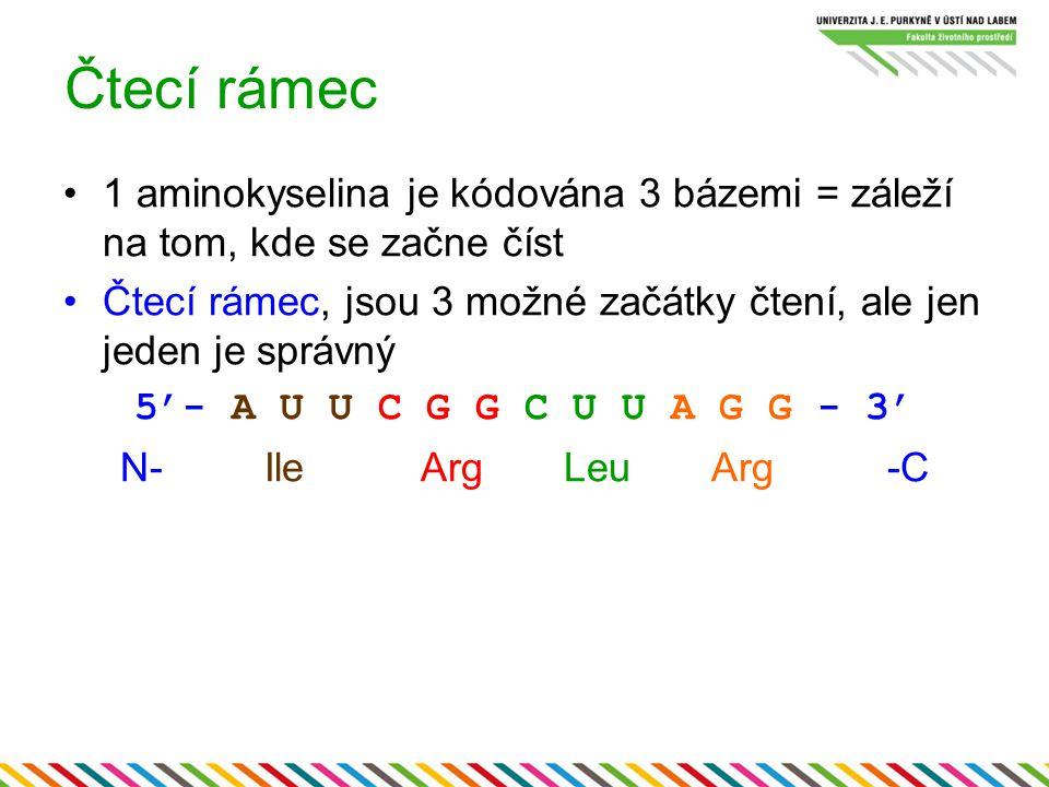 Čtecí rámec 1 aminokyselina je kódována 3 bázemi = záleží na tom, kde se začne číst Čtecí rámec, jsou 3 možné začátky čtení, ale jen jeden je správný