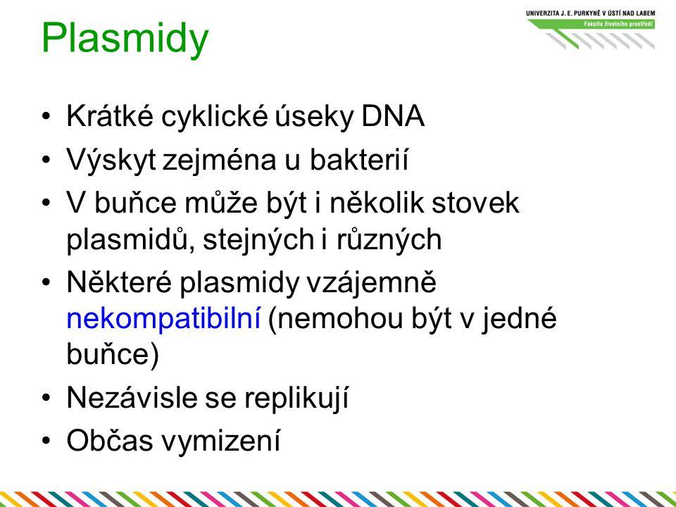 Plasmidy Krátké cyklické úseky DNA Výskyt zejména u bakterií V buňce může být i několik stovek plasmidů, stejných i různých Některé plasmidy vzájemně