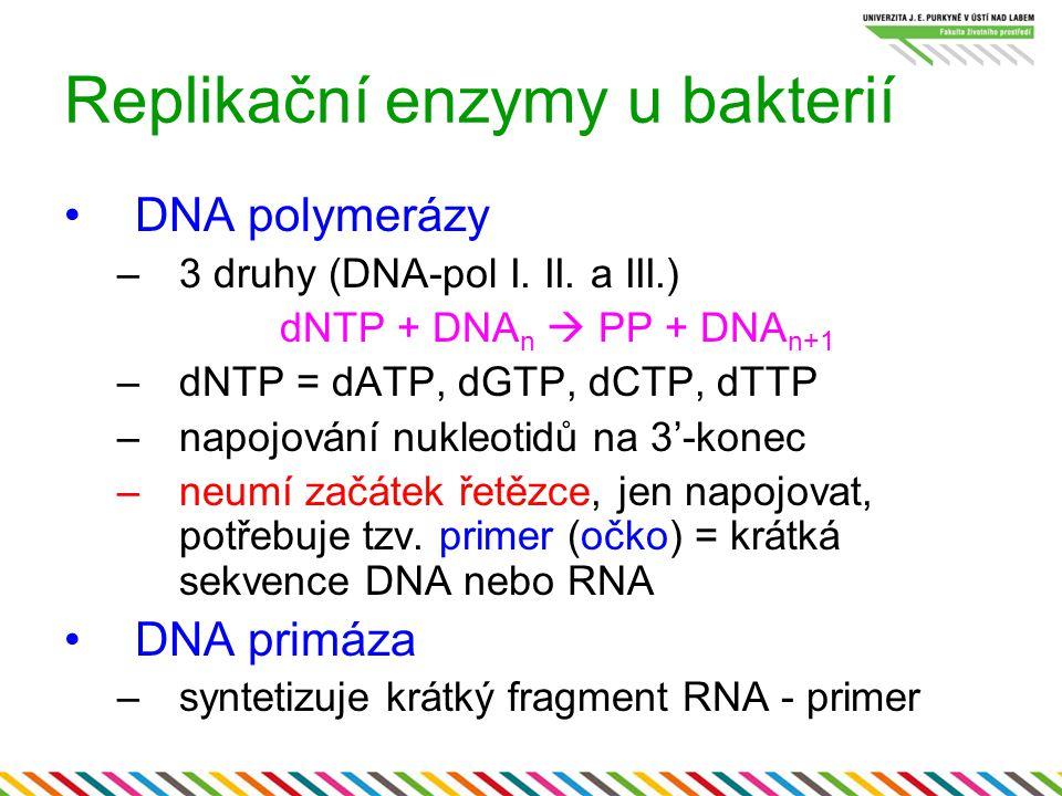 Replikační enzymy u bakterií DNA polymerázy –3 druhy (DNA-pol I. II. a III.) dNTP + DNA n  PP + DNA n+1 –dNTP = dATP, dGTP, dCTP, dTTP –napojování nu