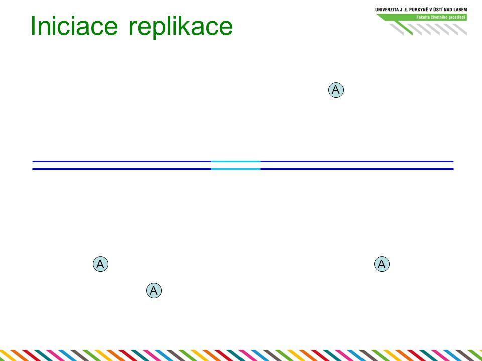 Iniciace replikace A A A A
