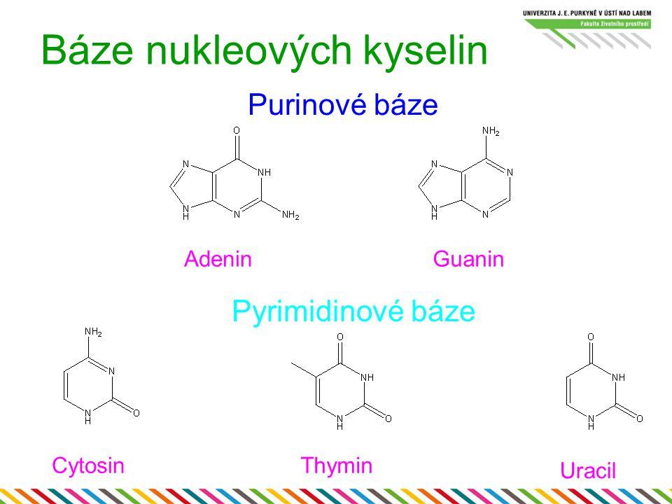 Báze nukleových kyselin AdeninGuanin CytosinThymin Uracil Purinové báze Pyrimidinové báze