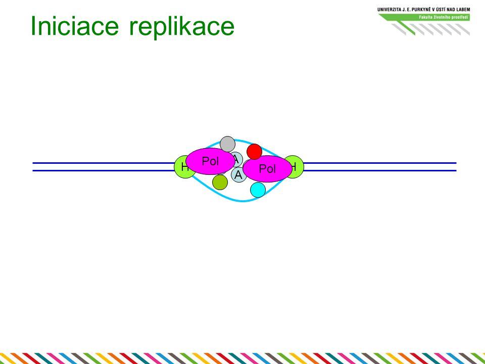 Iniciace replikace A A A A HH Pol