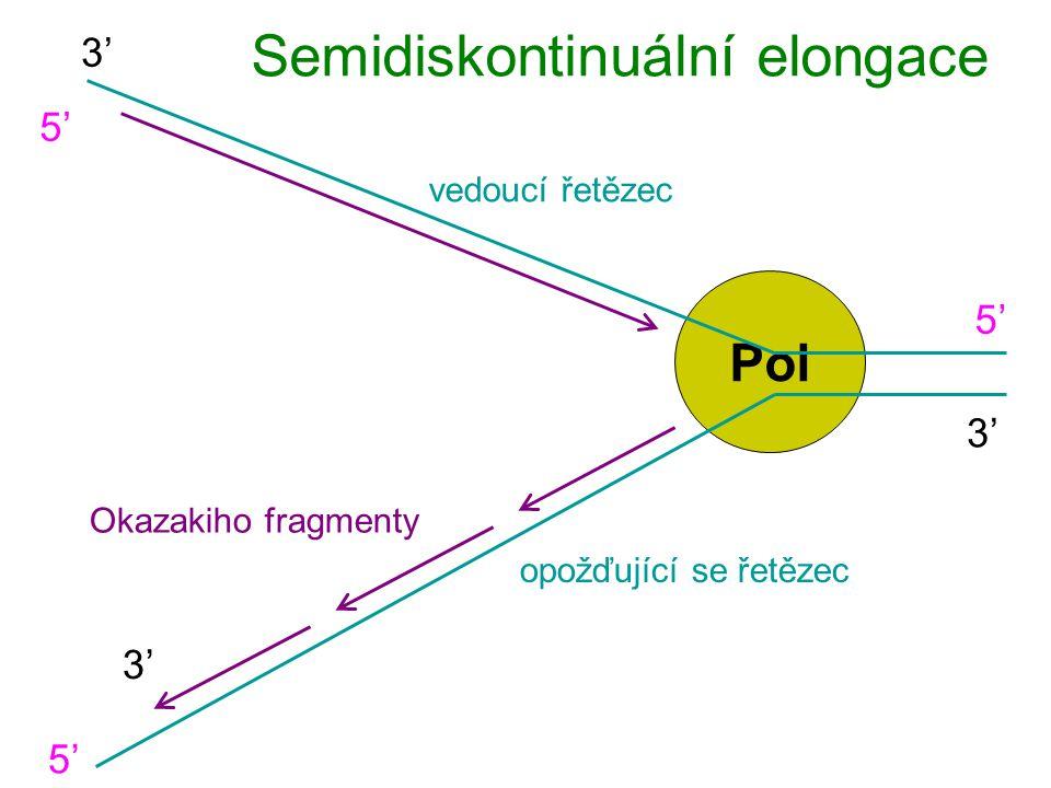 Pol Semidiskontinuální elongace 5'5' 5'5' 3' vedoucí řetězec opožďující se řetězec 5'5' 3' Okazakiho fragmenty