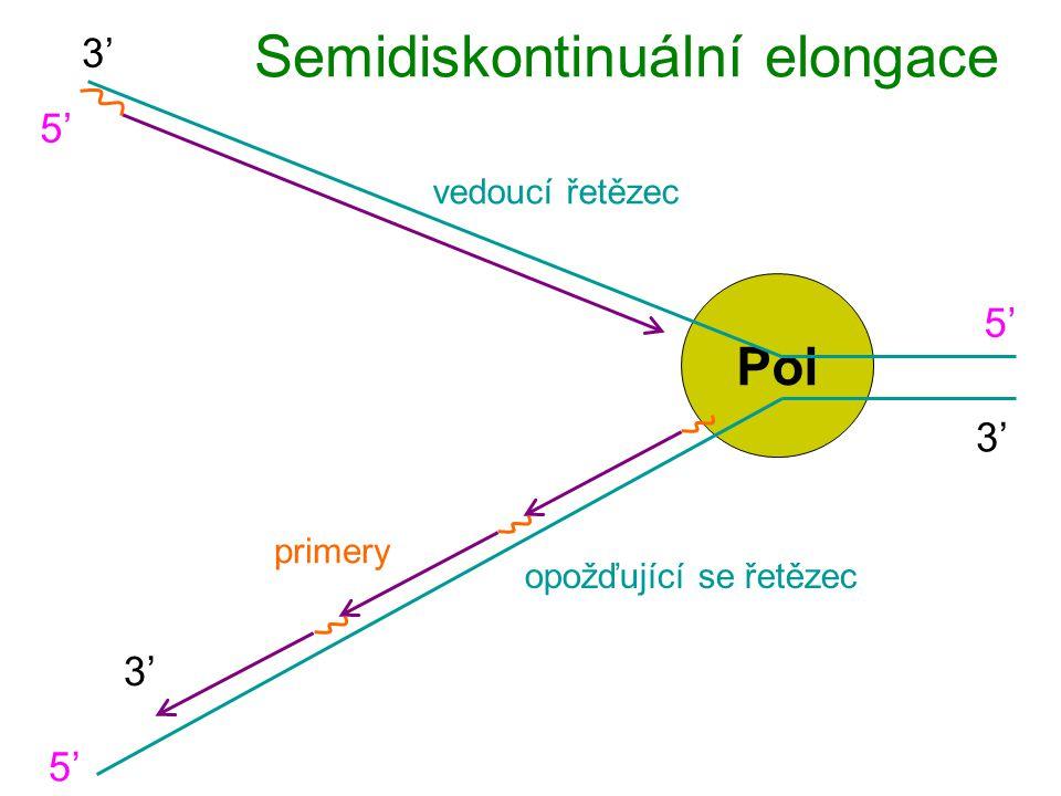 Pol Semidiskontinuální elongace 5'5' 5'5' 3' vedoucí řetězec opožďující se řetězec 5'5' 3' primery
