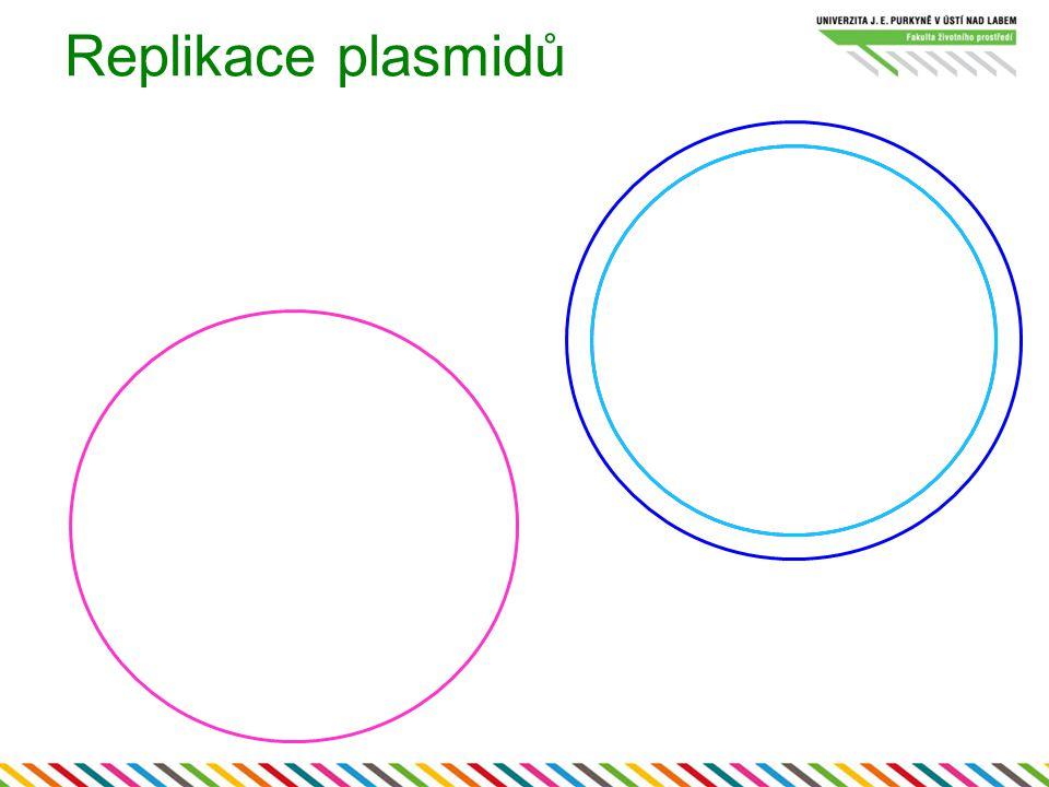 Replikace plasmidů