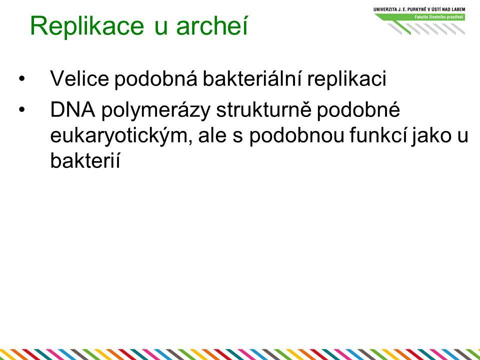 Replikace u archeí Velice podobná bakteriální replikaci DNA polymerázy strukturně podobné eukaryotickým, ale s podobnou funkcí jako u bakterií