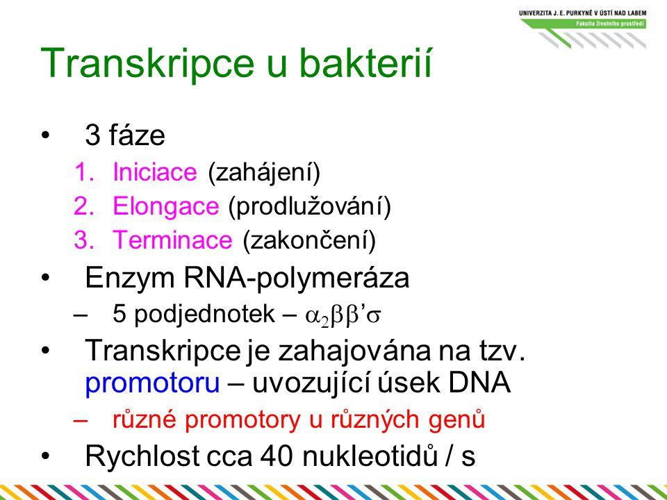 Transkripce u bakterií 3 fáze 1.Iniciace (zahájení) 2.Elongace (prodlužování) 3.Terminace (zakončení) Enzym RNA-polymeráza –5 podjednotek –    ' 