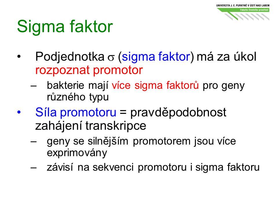 Sigma faktor Podjednotka  (sigma faktor) má za úkol rozpoznat promotor –bakterie mají více sigma faktorů pro geny různého typu Síla promotoru = prav