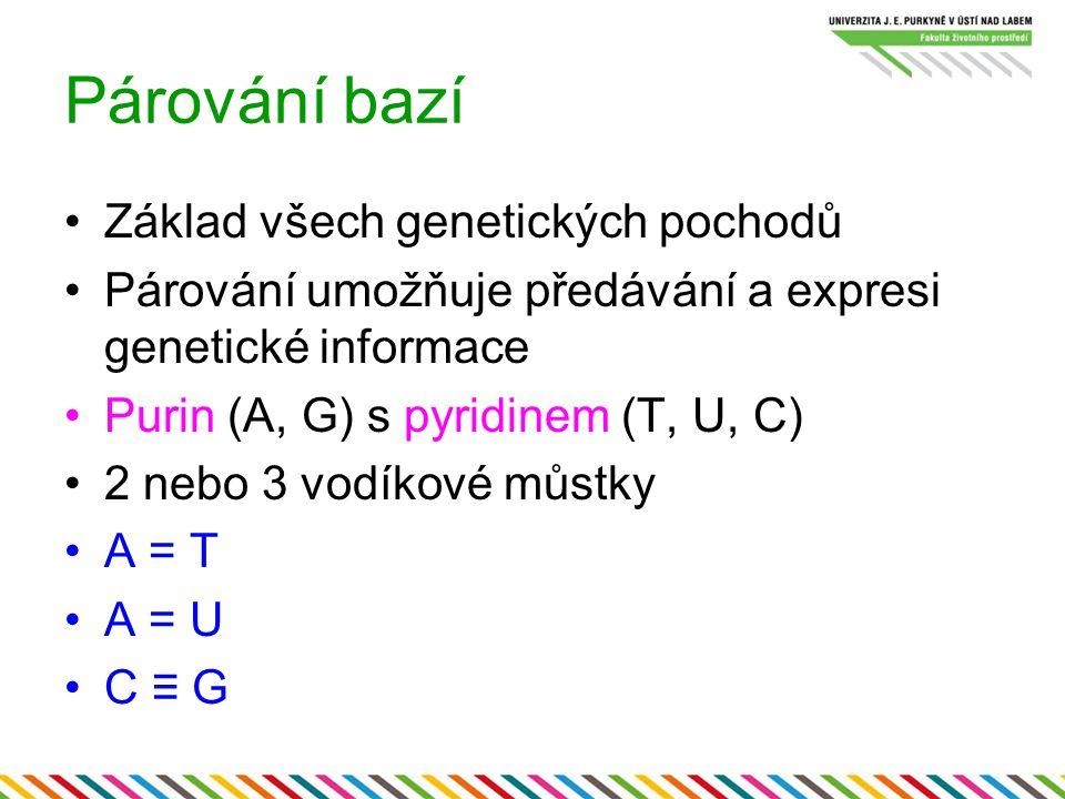 Párování bazí Základ všech genetických pochodů Párování umožňuje předávání a expresi genetické informace Purin (A, G) s pyridinem (T, U, C) 2 nebo 3 v