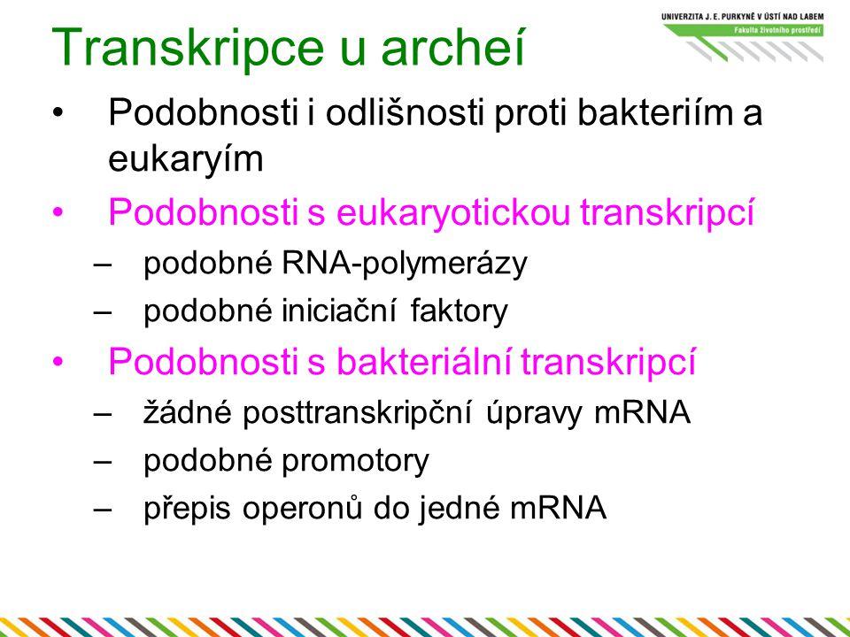 Transkripce u archeí Podobnosti i odlišnosti proti bakteriím a eukaryím Podobnosti s eukaryotickou transkripcí –podobné RNA-polymerázy –podobné inicia
